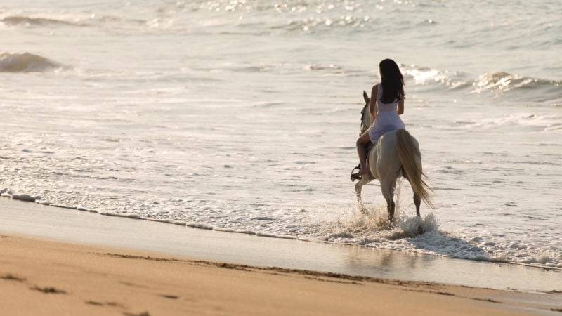 Why You Need To Stay On Your White Horse
